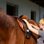 EQUINE MASSAGE _ Siodla 08